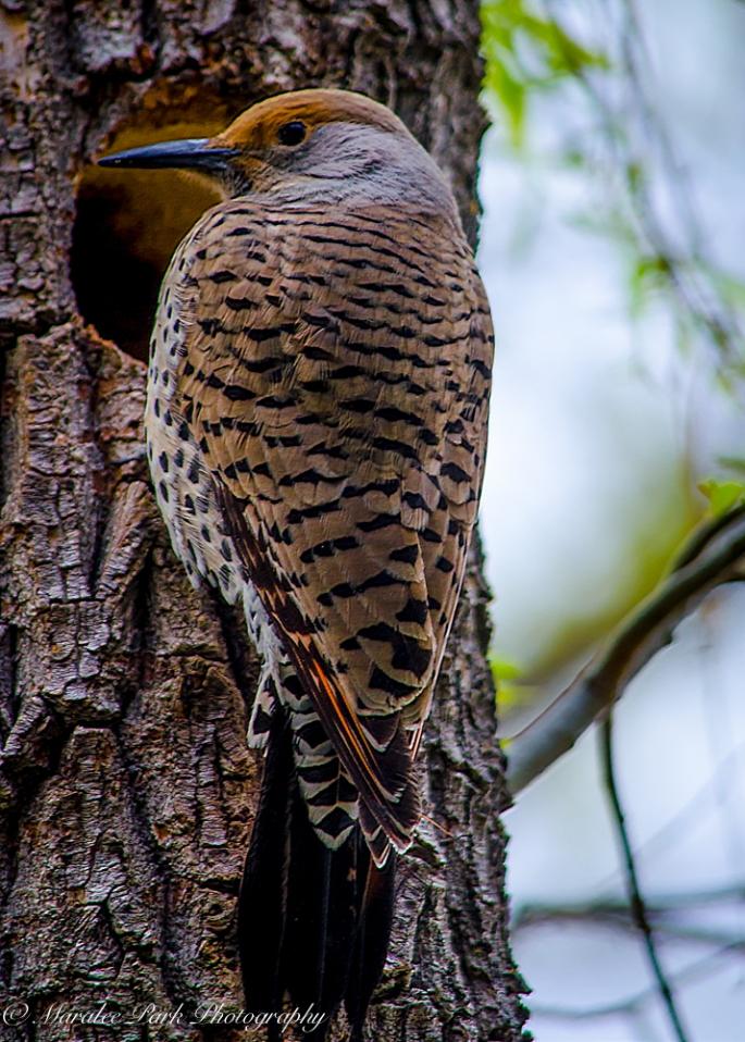 Birds-0152March 31, 2015