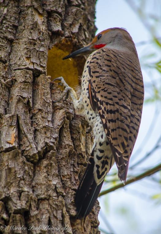 Birds-0277April 03, 2015