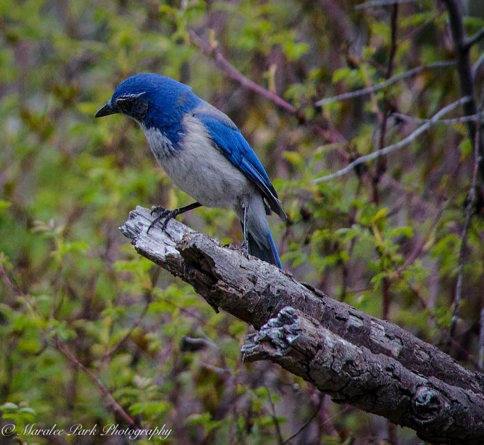 Birds-0291April 05, 2015