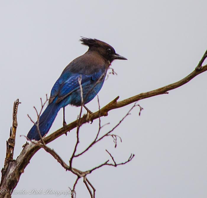 Birds-0297April 05, 2015