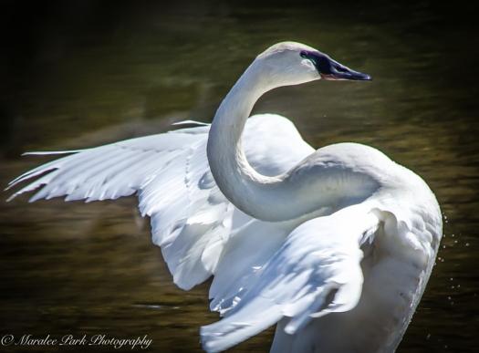Birds-0446April 11, 2015