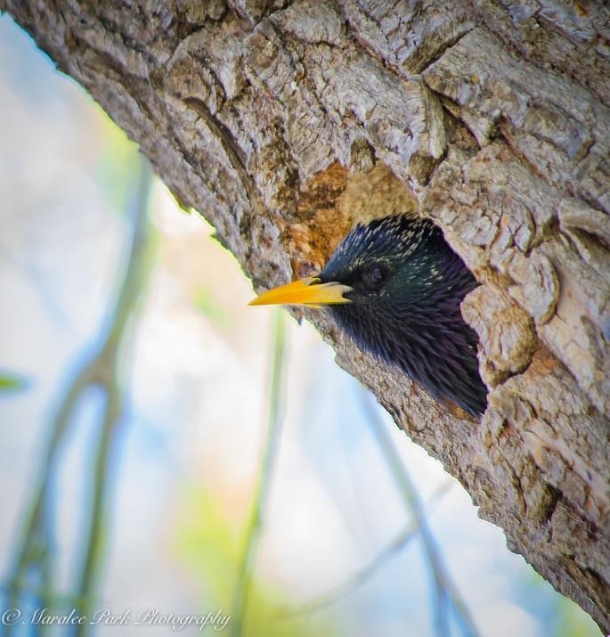 Birds-0561April 15, 2015