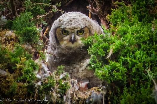 Owlet-2072May 10, 2015