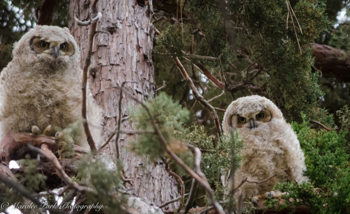Owlet-2218May 13, 2015