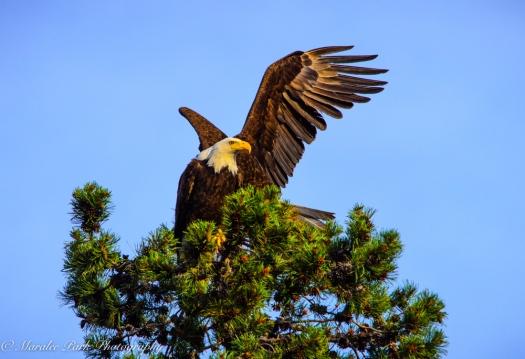 Eagle-3900June 24, 2015