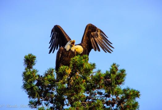Eagle-3902June 24, 2015