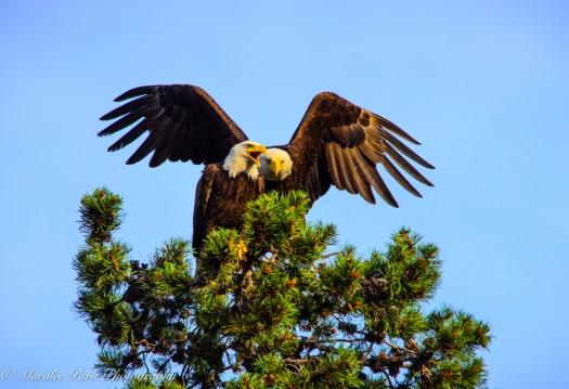 Eagle-3903June 24, 2015