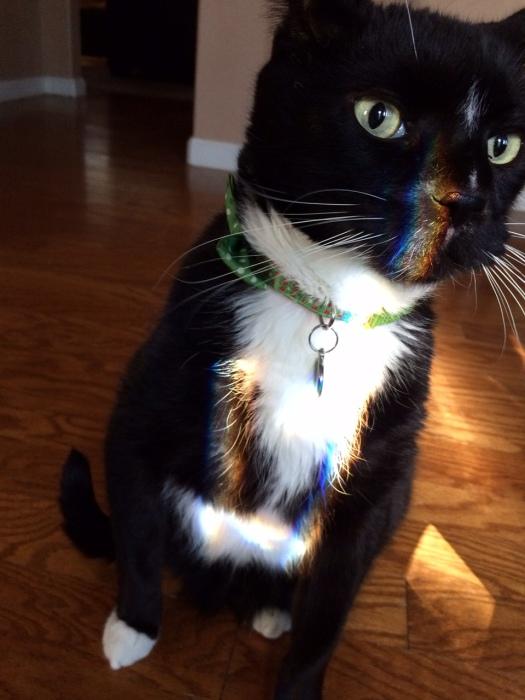 Rainbow Boo
