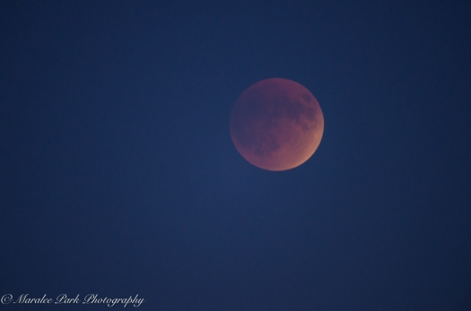 Lunar Eclipse-6911September 27, 2015