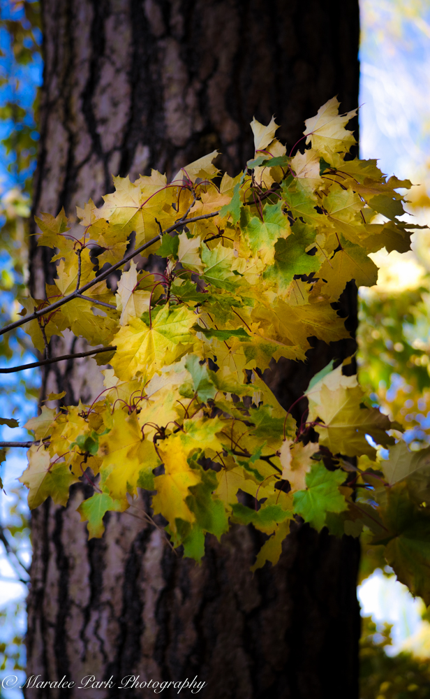 Autumn-7145October 20, 2015