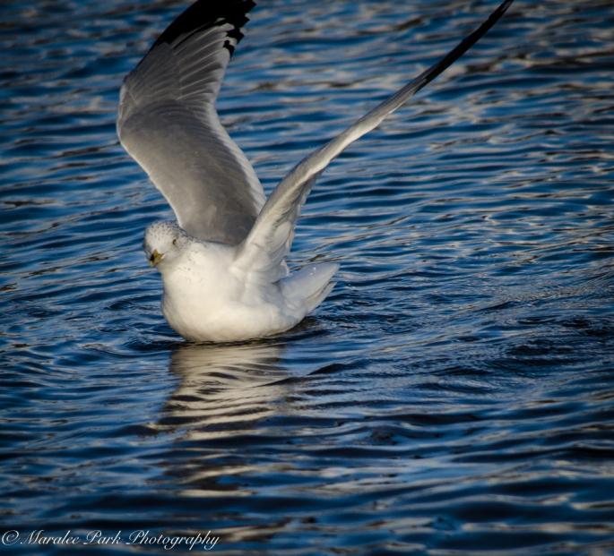 Birds-8246January 16, 2016