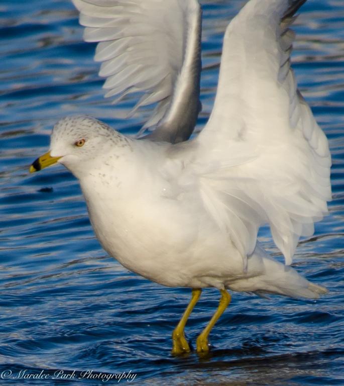 Birds-8249January 16, 2016