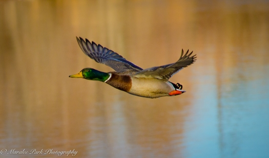 Birds-8718January 30, 2016