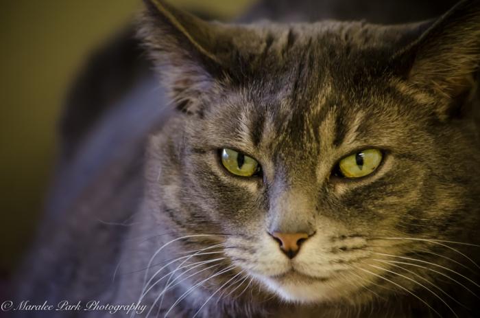 Cats-8000December 17, 2015