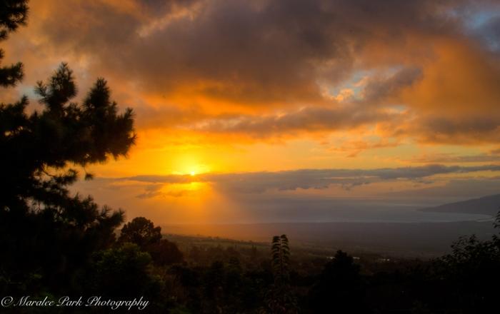 Hawaii 2014.Maralee-6885November 21, 2014And2more-2