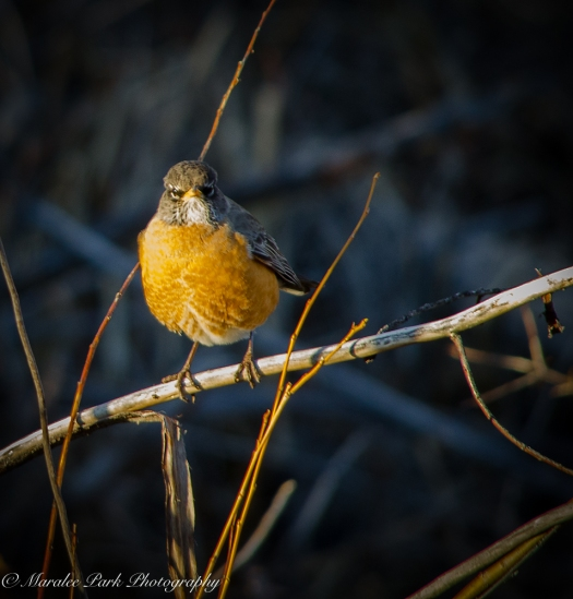 Birds-8767January 31, 2016