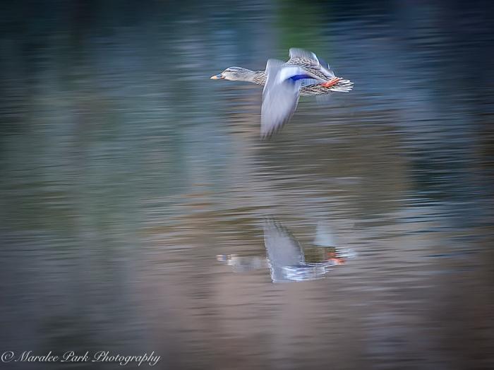 Birds-8852February 06, 2016-2