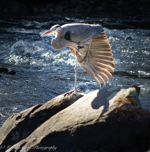 Birds-8920February 08, 2016