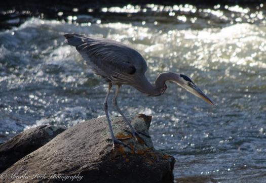 Birds-8988February 08, 2016