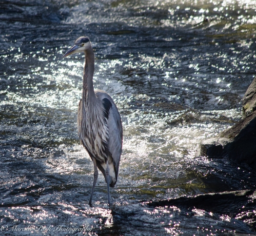 Birds-9041February 08, 2016