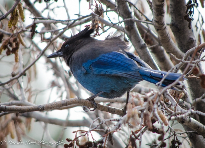 Birds-9066February 10, 2016