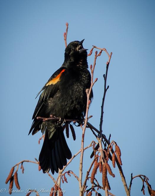 Birds-9109February 12, 2016