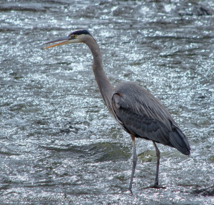 Birds-9187February 16, 2016