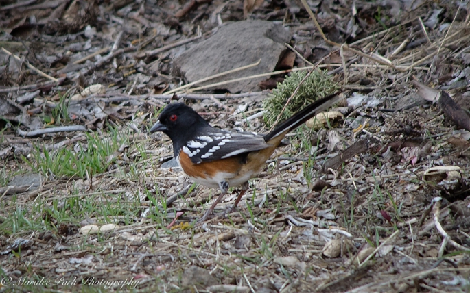 Birds-9343February 29, 2016