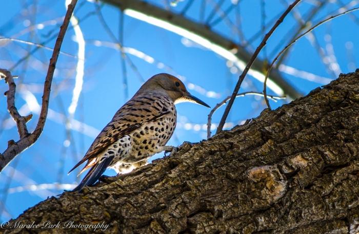 Birds-9451March 03, 2016