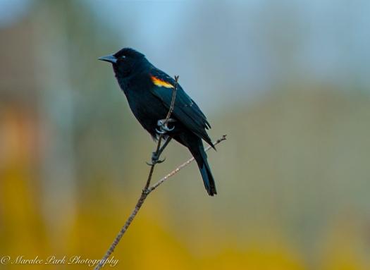 Birds-9464March 04, 2016