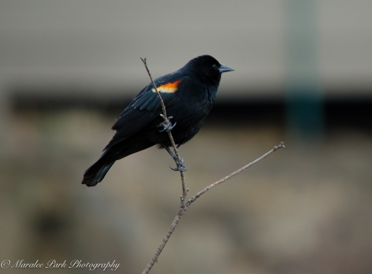 Birds-9473March 04, 2016