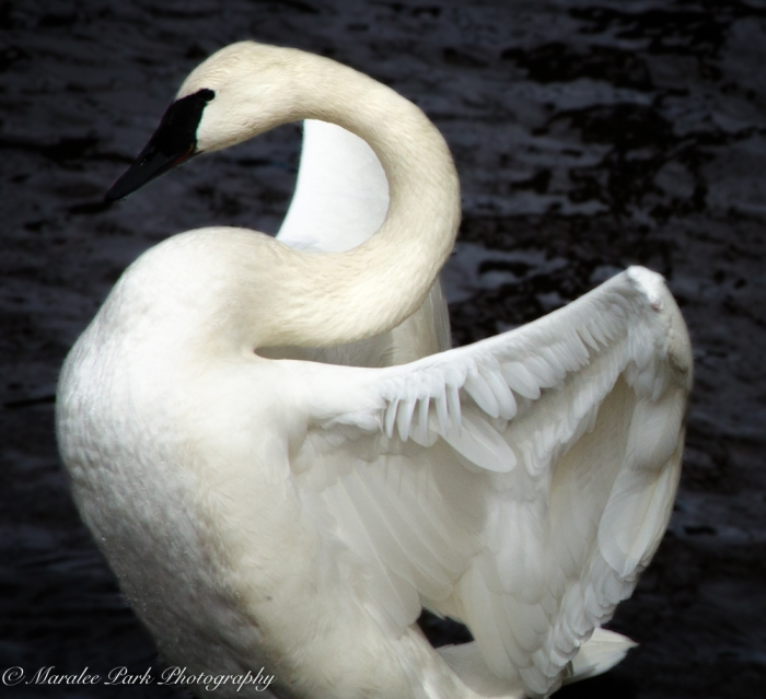 Birds-9851March 23, 2016