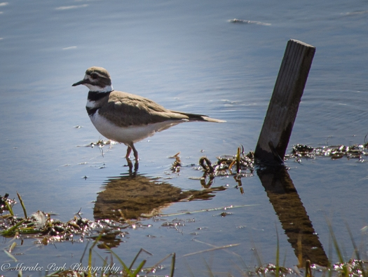 Birds-9877March 25, 2016