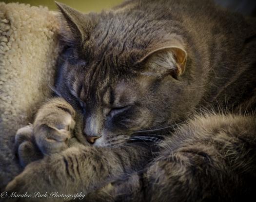 Cats-8040January 14, 2016