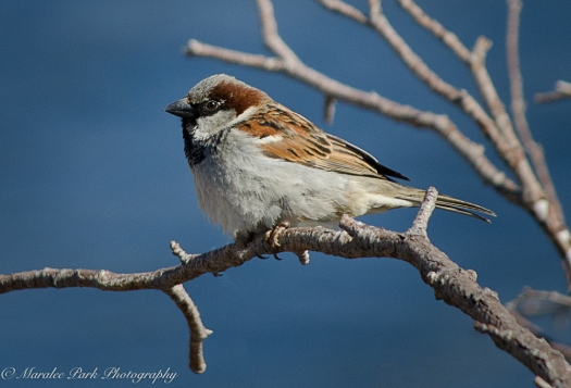 Bird 040116
