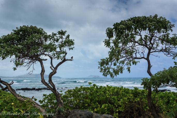 Hawaii-02187April 08, 2016