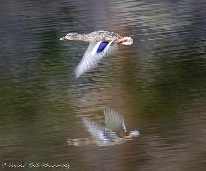 Birds-8851February 06, 2016
