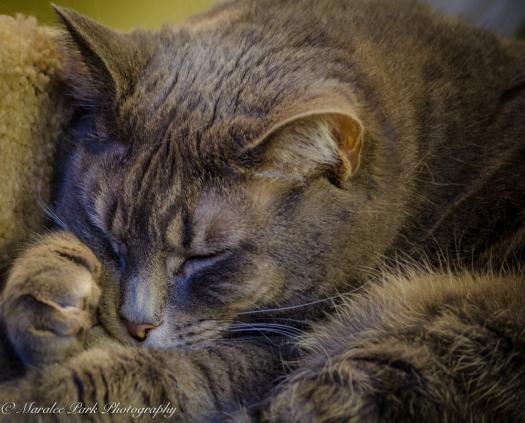 Cats-8039January 14, 2016