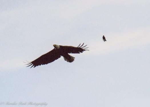 eagle-01262june-24-2015