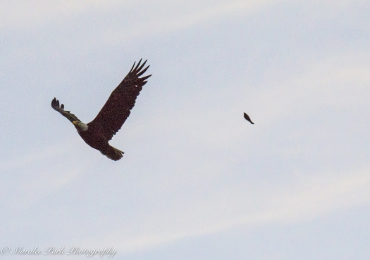 eagle-01263june-24-2015