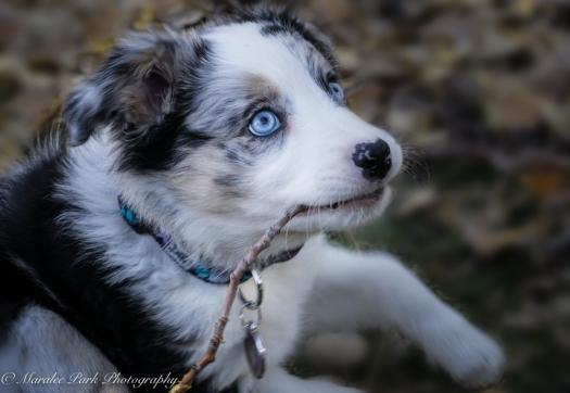 november-04-2016kona-puppy393