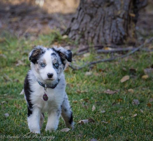 november-04-2016kona-puppy714