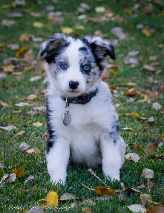 november-04-2016kona-puppy897