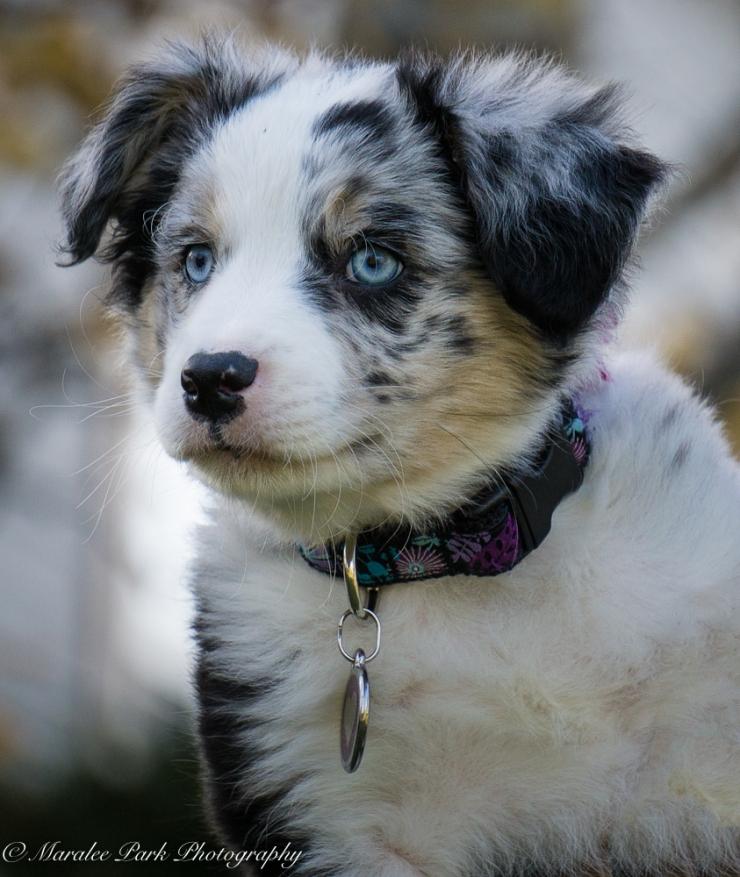 november-04-2016kona-puppy963