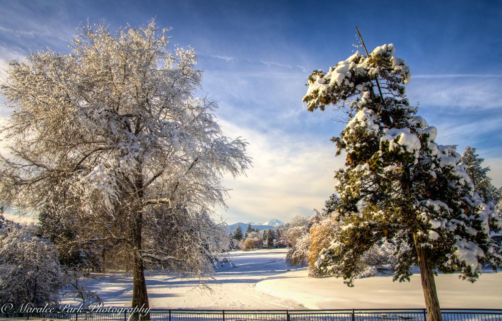january-13-2017nature3097_8_9