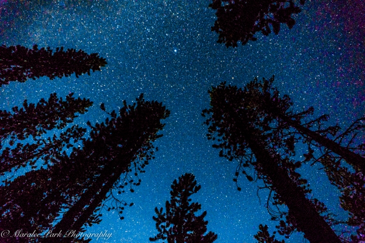 That night sky with trees silhouetted.