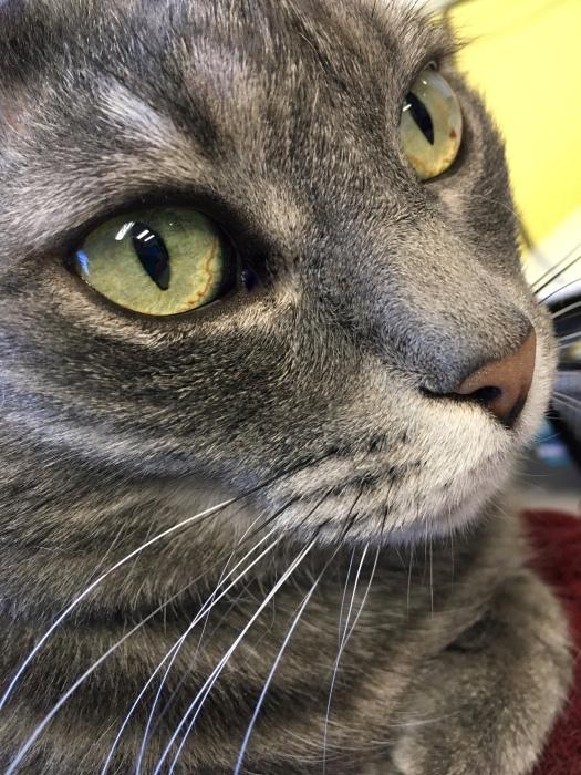 Miranda, Cat