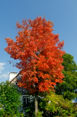 First sign of autumn