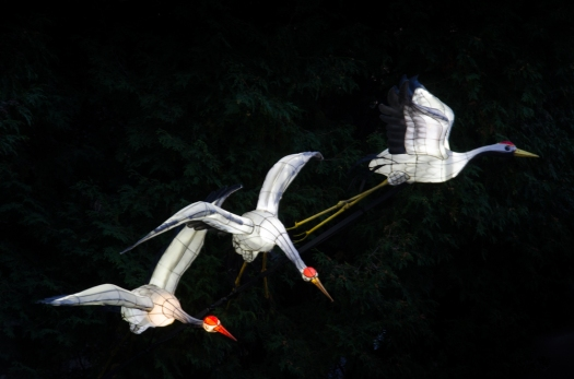 Flying Red-Crowned Cranes