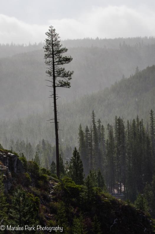 A misty day at Tumalo Falls